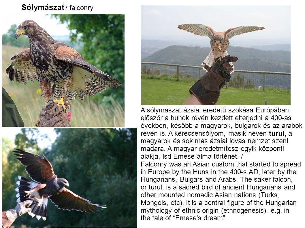 Sólymászat / falconry A sólymászat ázsiai eredetű szokása Európában
