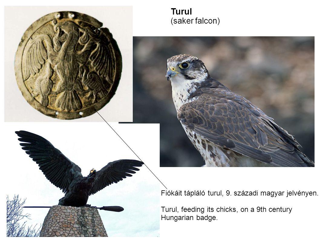 Turul (saker falcon) Fiókáit tápláló turul, 9. századi magyar jelvényen. Turul, feeding its chicks, on a 9th century.