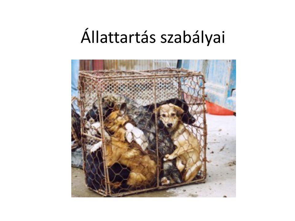 Állattartás szabályai