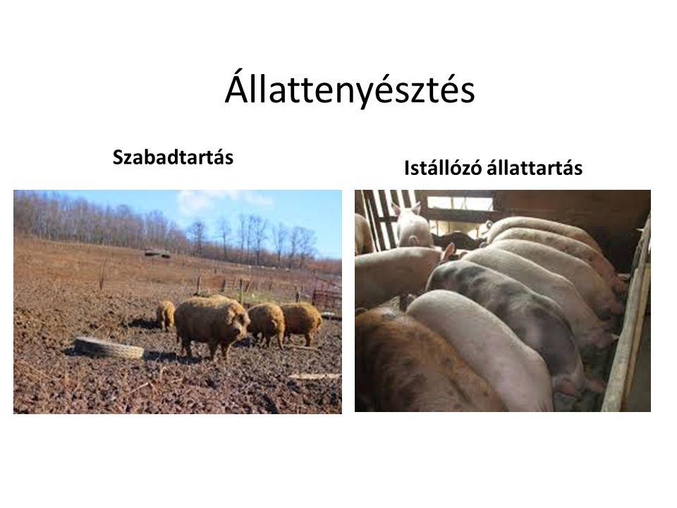 Állattenyésztés Szabadtartás Istállózó állattartás