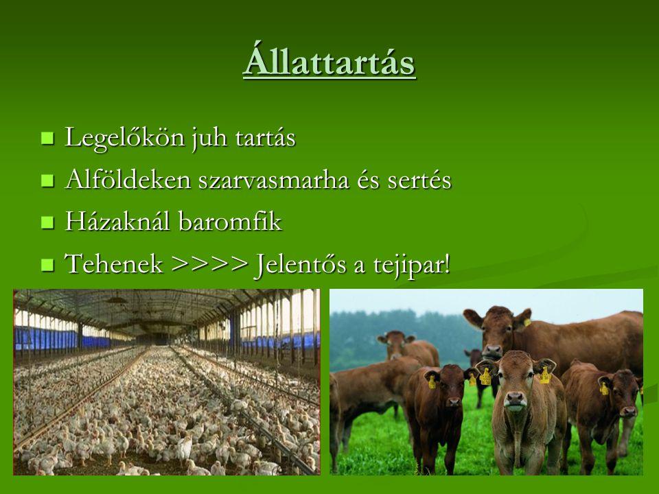 Állattartás Legelőkön juh tartás Alföldeken szarvasmarha és sertés