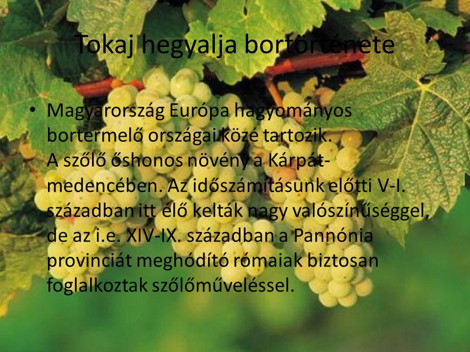 Tokaj hegyalja bortörténete