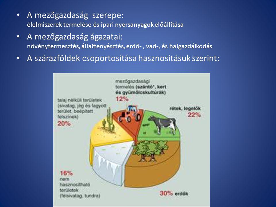 A mezőgazdaság szerepe: élelmiszerek termelése és ipari nyersanyagok előállítása