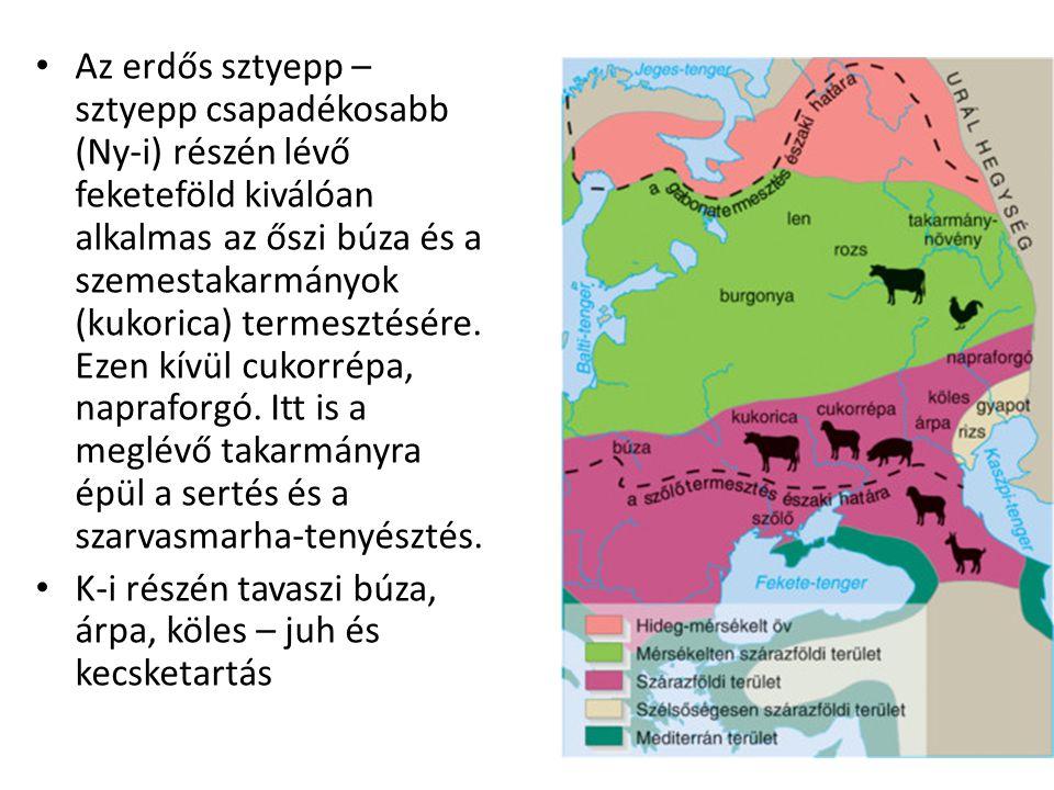 Az erdős sztyepp –sztyepp csapadékosabb (Ny-i) részén lévő feketeföld kiválóan alkalmas az őszi búza és a szemestakarmányok (kukorica) termesztésére. Ezen kívül cukorrépa, napraforgó. Itt is a meglévő takarmányra épül a sertés és a szarvasmarha-tenyésztés.