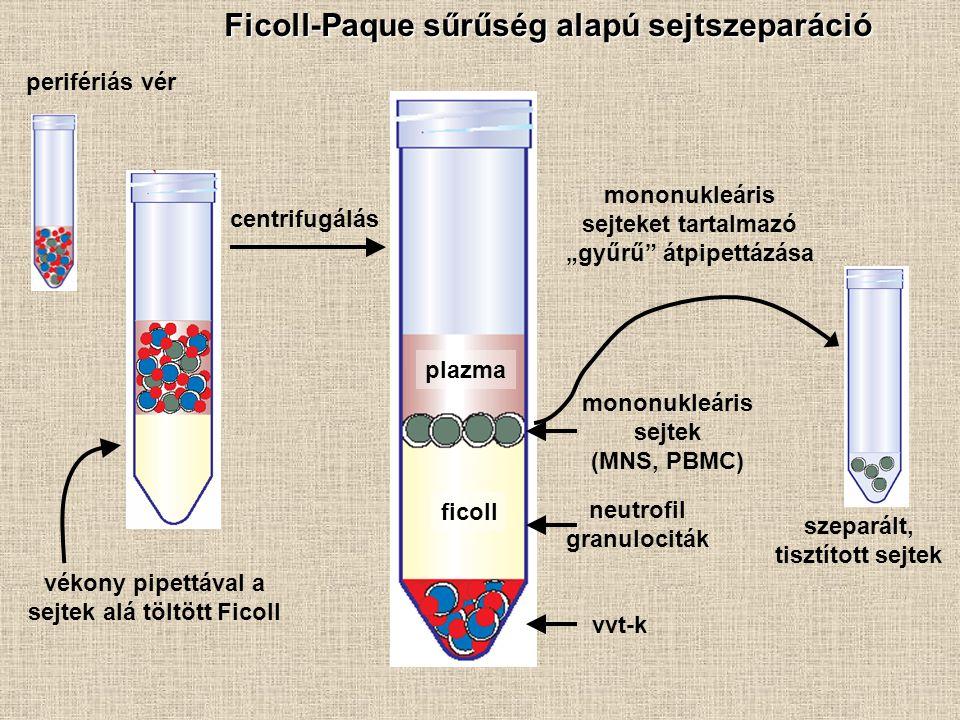 Ficoll-Paque sűrűség alapú sejtszeparáció