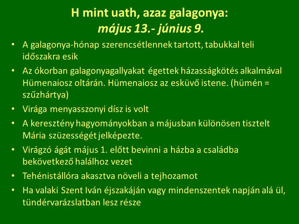 H mint uath, azaz galagonya: május 13.- június 9.