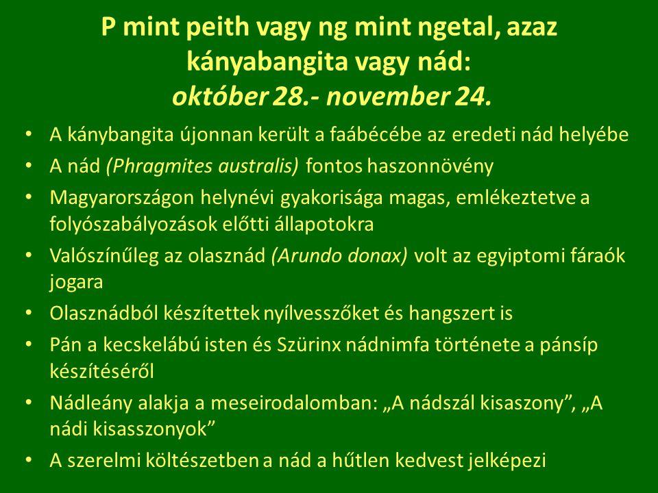 P mint peith vagy ng mint ngetal, azaz kányabangita vagy nád: október 28.- november 24.