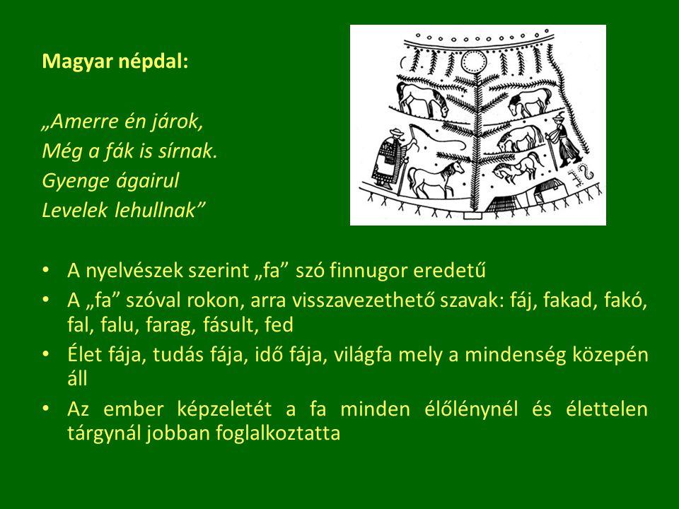 """Magyar népdal: """"Amerre én járok, Még a fák is sírnak. Gyenge ágairul. Levelek lehullnak A nyelvészek szerint """"fa szó finnugor eredetű."""