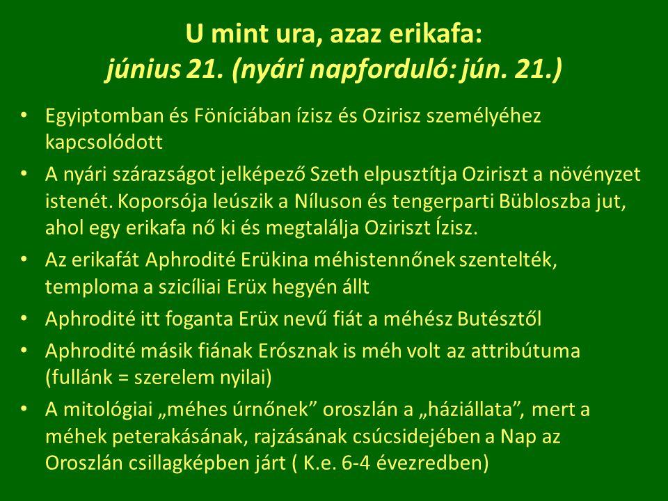 U mint ura, azaz erikafa: június 21. (nyári napforduló: jún. 21.)