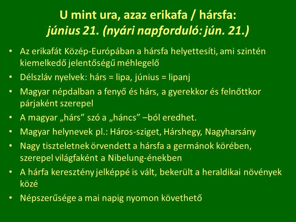 U mint ura, azaz erikafa / hársfa: június 21. (nyári napforduló: jún