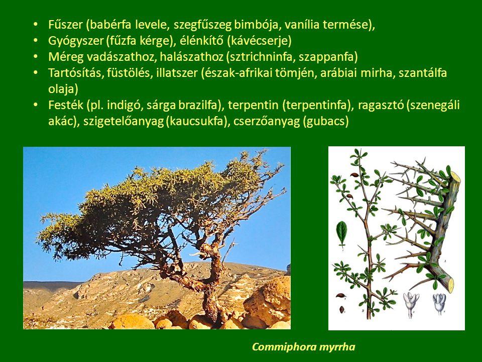 Fűszer (babérfa levele, szegfűszeg bimbója, vanília termése),