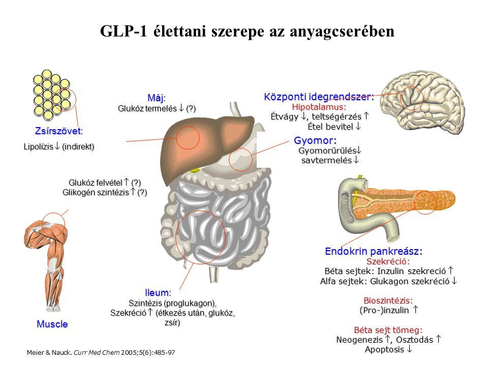 GLP-1 élettani szerepe az anyagcserében