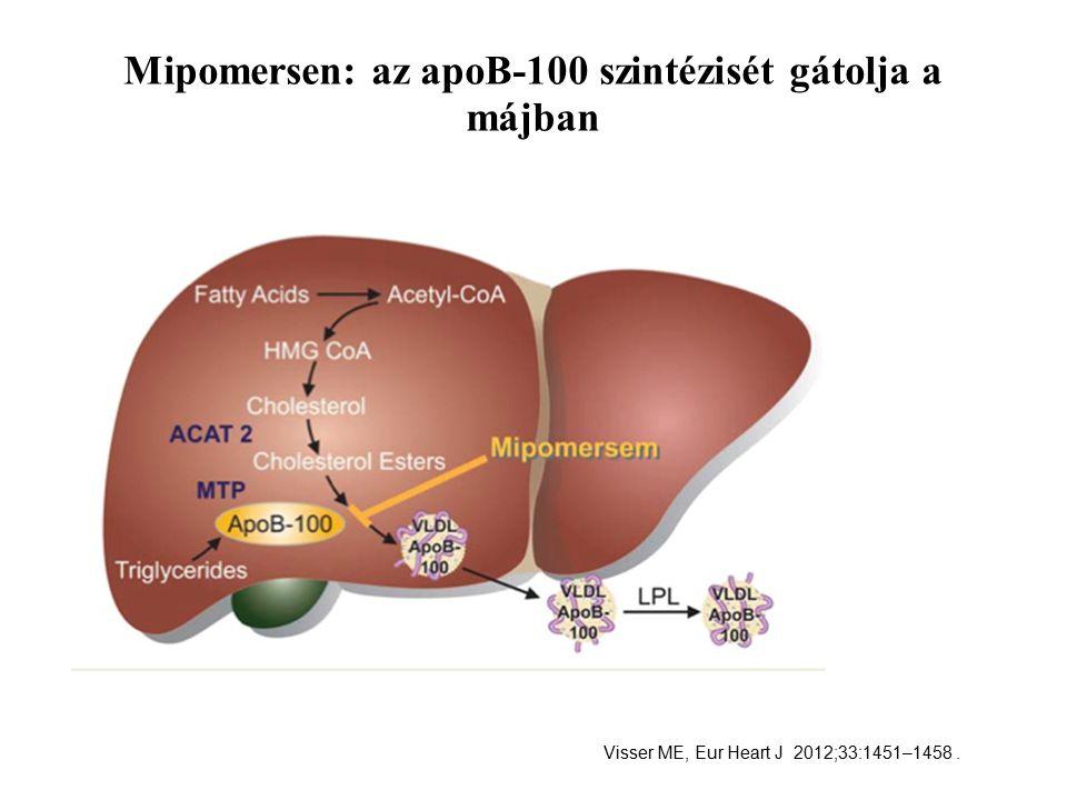 Mipomersen: az apoB-100 szintézisét gátolja a májban