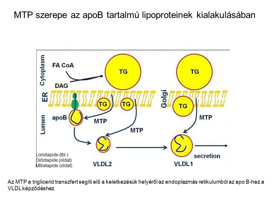 MTP szerepe az apoB tartalmú lipoproteinek kialakulásában