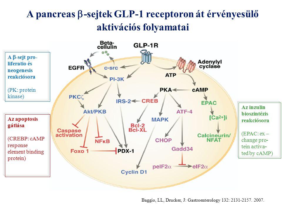 A pancreas -sejtek GLP-1 receptoron át érvényesülő aktivációs folyamatai
