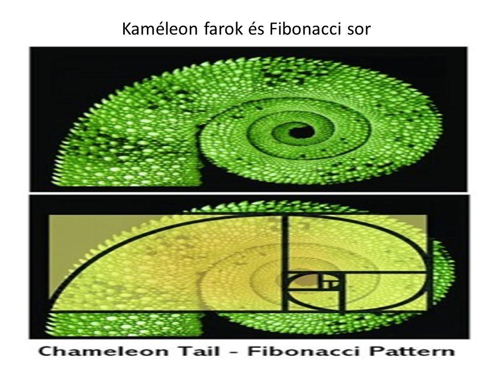 Kaméleon farok és Fibonacci sor