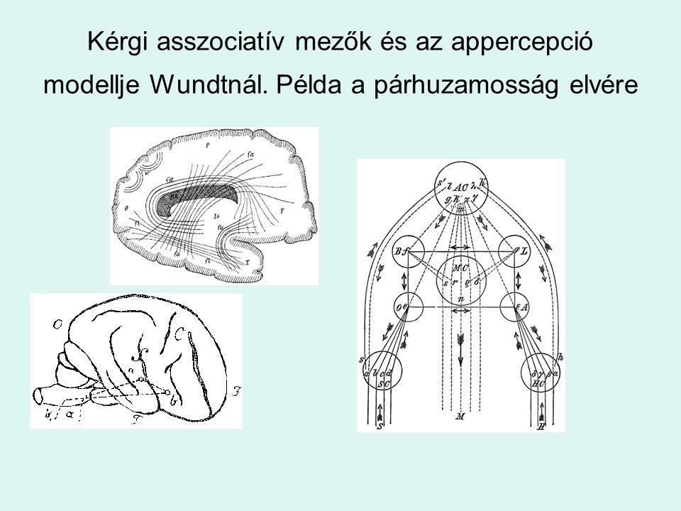 Kérgi asszociatív mezők és az appercepció modellje Wundtnál