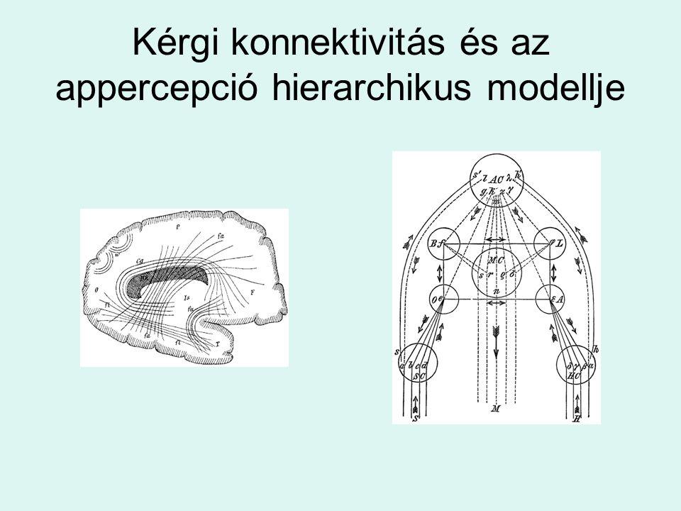 Kérgi konnektivitás és az appercepció hierarchikus modellje