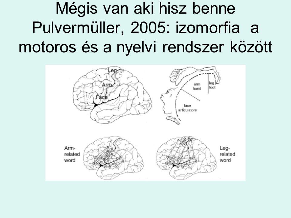 Mégis van aki hisz benne Pulvermüller, 2005: izomorfia a motoros és a nyelvi rendszer között