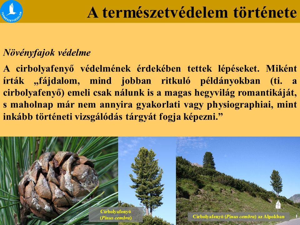 Cirbolyafenyő (Pinus cembra) az Alpokban