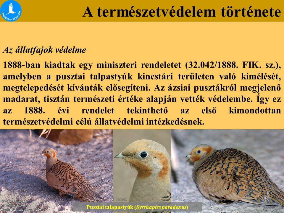 Pusztai talapastyúk (Syrrhaptes paradoxus)
