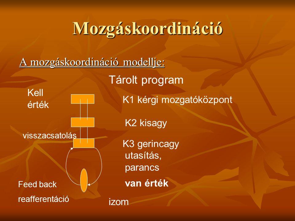 Mozgáskoordináció A mozgáskoordináció modellje: Tárolt program