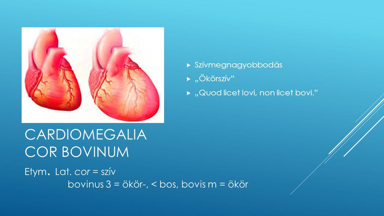Cardiomegalia cor bovinum