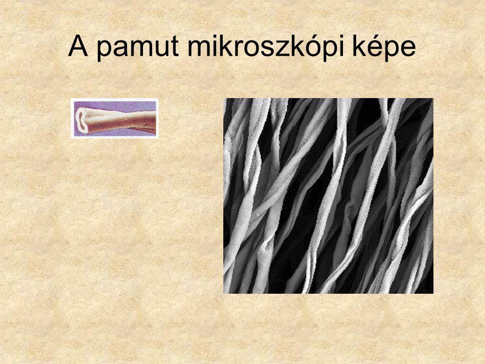 A pamut mikroszkópi képe