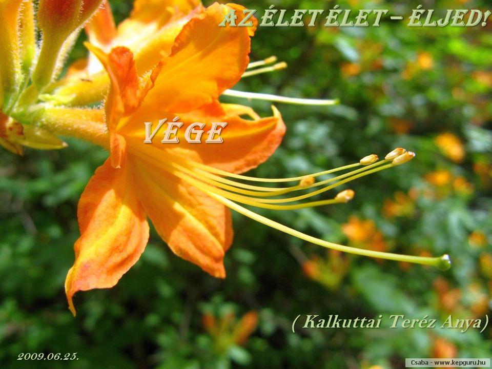 Az élet élet – éljed! vége ( Kalkuttai Teréz Anya) 2009.06.25.