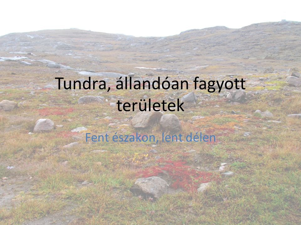 Tundra, állandóan fagyott területek