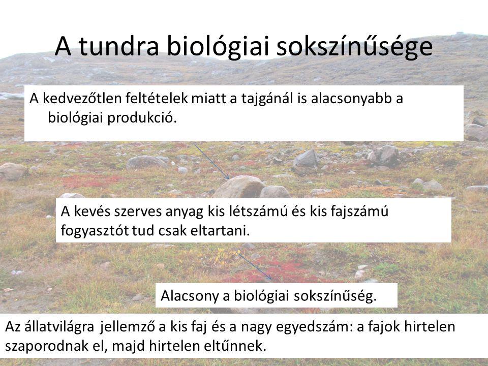 A tundra biológiai sokszínűsége