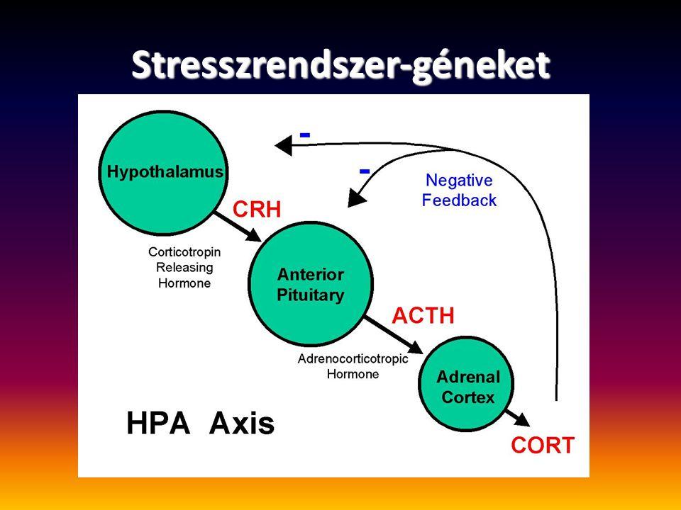 Stresszrendszer-géneket
