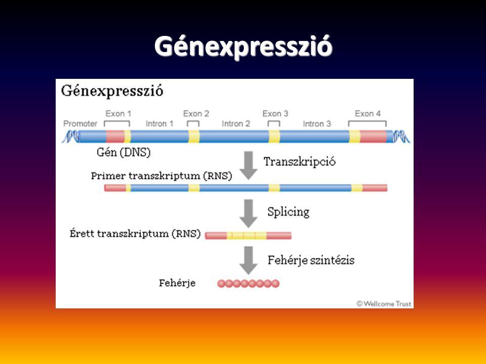 Génexpresszió
