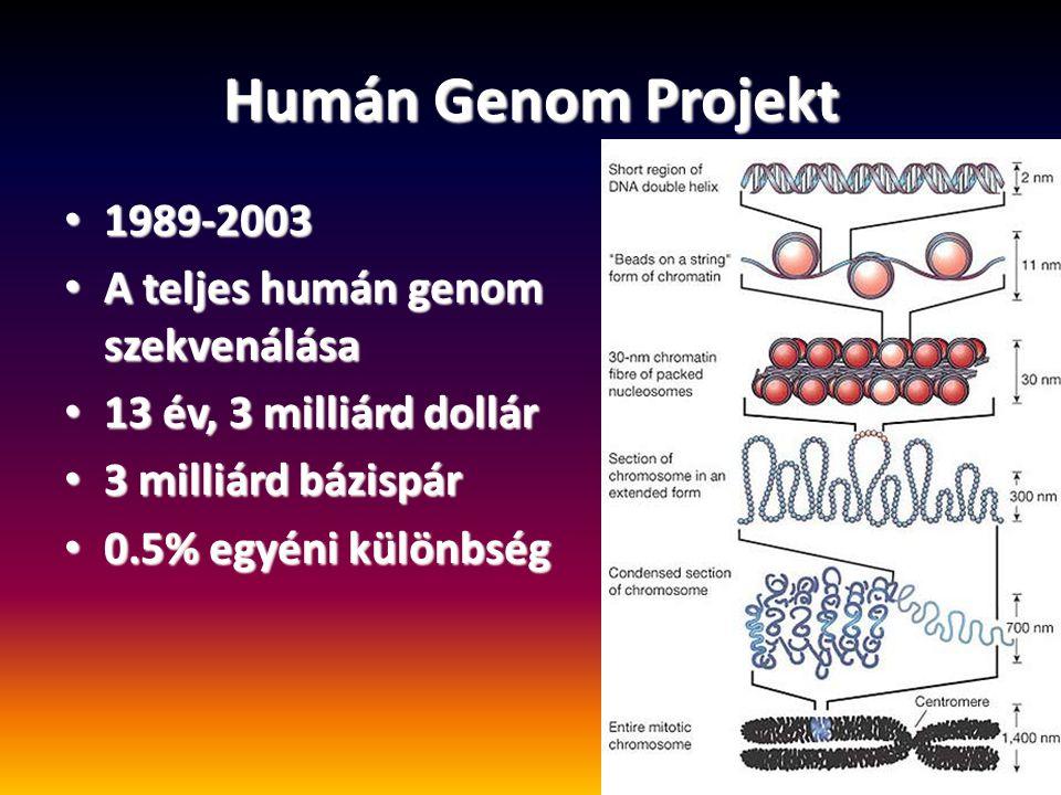 Humán Genom Projekt 1989-2003 A teljes humán genom szekvenálása
