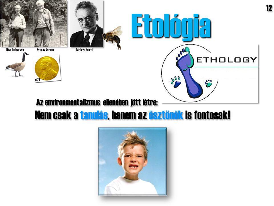 Etológia Nem csak a tanulás, hanem az ösztönök is fontosak! 12