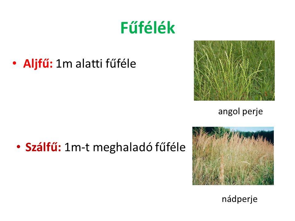 Fűfélék Aljfű: 1m alatti fűféle Szálfű: 1m-t meghaladó fűféle