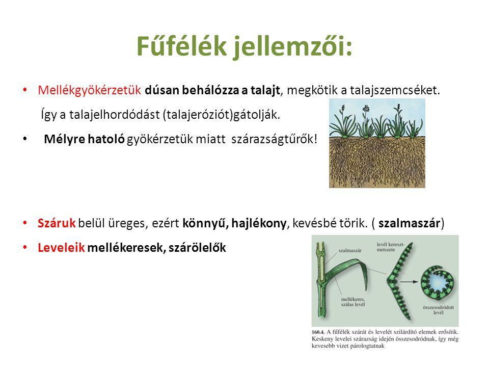 Fűfélék jellemzői: Mellékgyökérzetük dúsan behálózza a talajt, megkötik a talajszemcséket. Így a talajelhordódást (talajeróziót)gátolják.