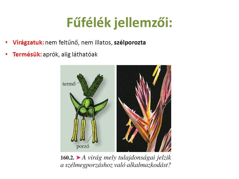 Fűfélék jellemzői: Virágzatuk: nem feltűnő, nem illatos, szélporozta