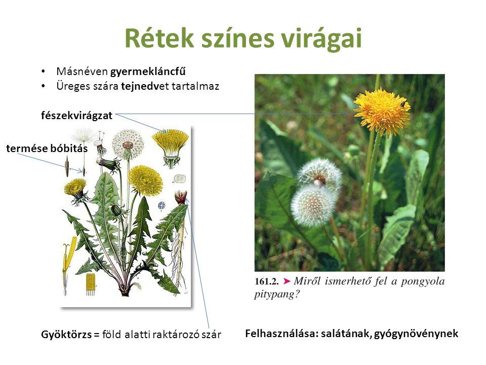 Rétek színes virágai Másnéven gyermekláncfű