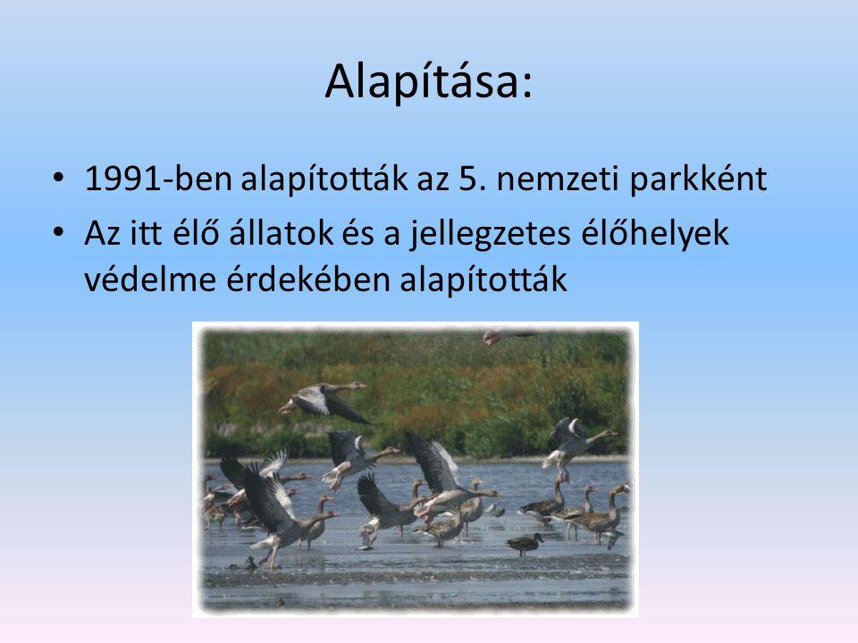 Alapítása: 1991-ben alapították az 5. nemzeti parkként