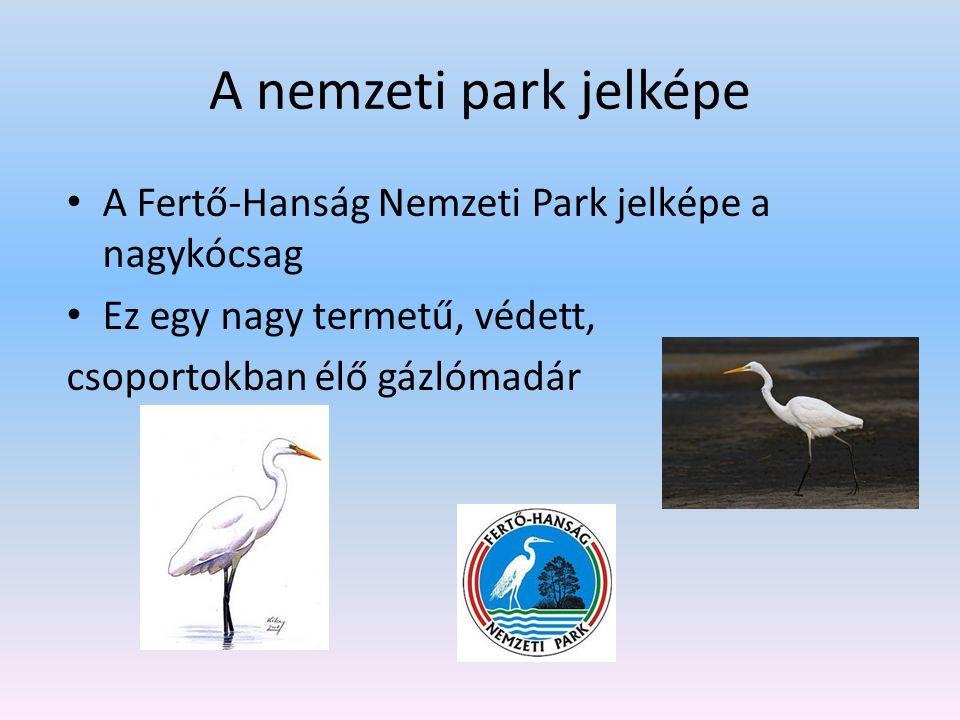 A nemzeti park jelképe A Fertő-Hanság Nemzeti Park jelképe a nagykócsag. Ez egy nagy termetű, védett,