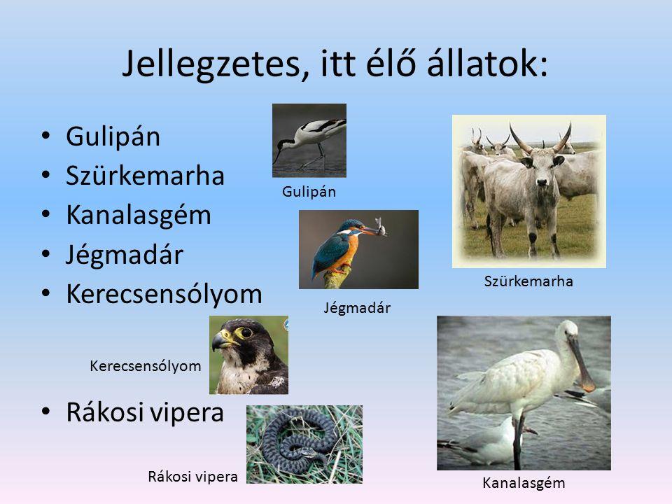 Jellegzetes, itt élő állatok: