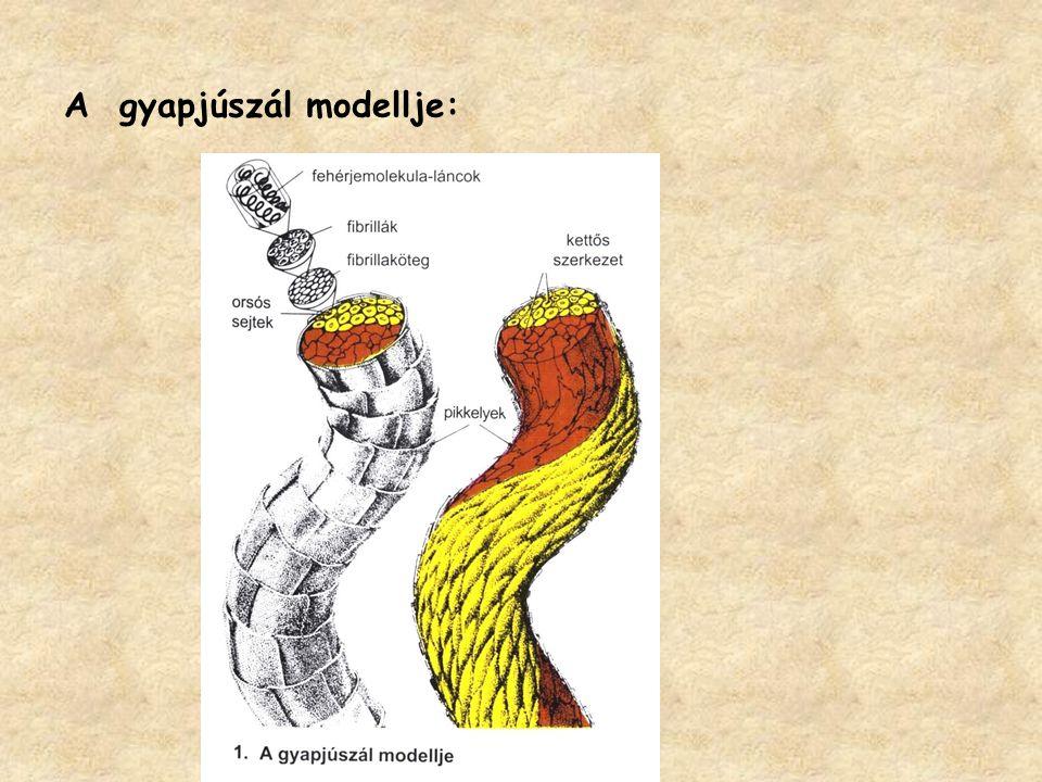 A gyapjúszál modellje: