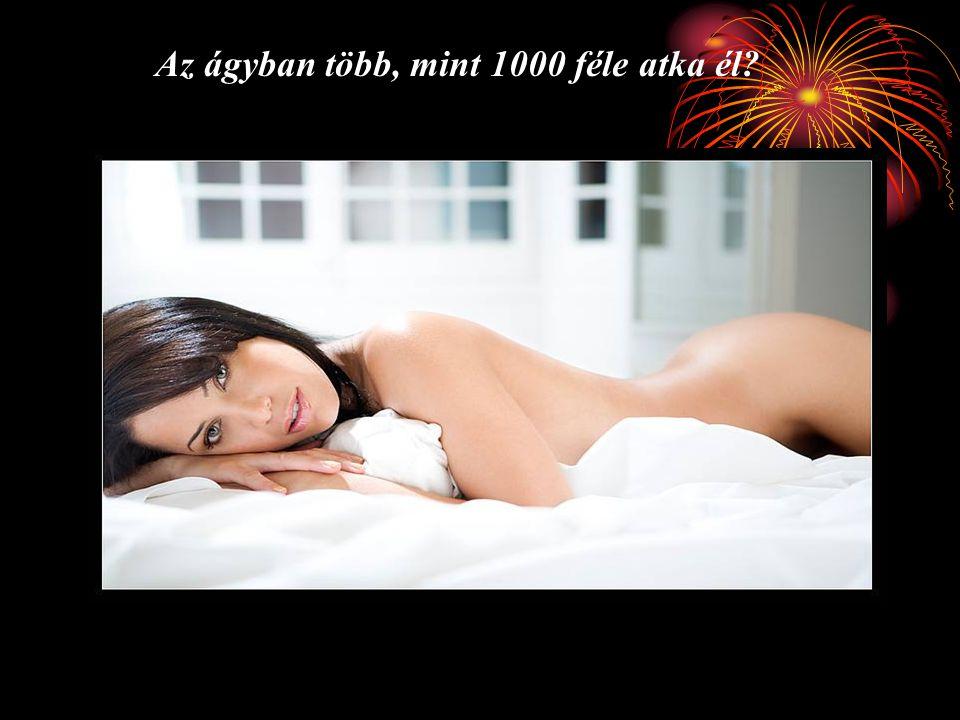 Az ágyban több, mint 1000 féle atka él