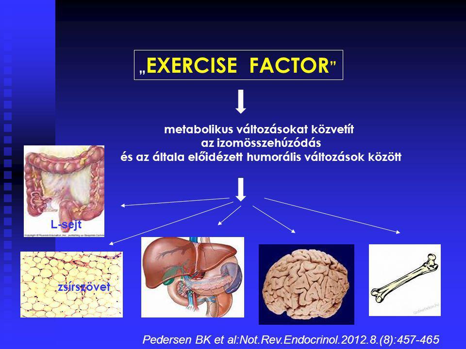 """""""EXERCISE FACTOR metabolikus változásokat közvetít"""