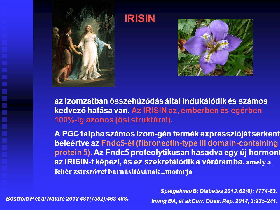 Boström P et al Nature 2012 481(7382):463-468.