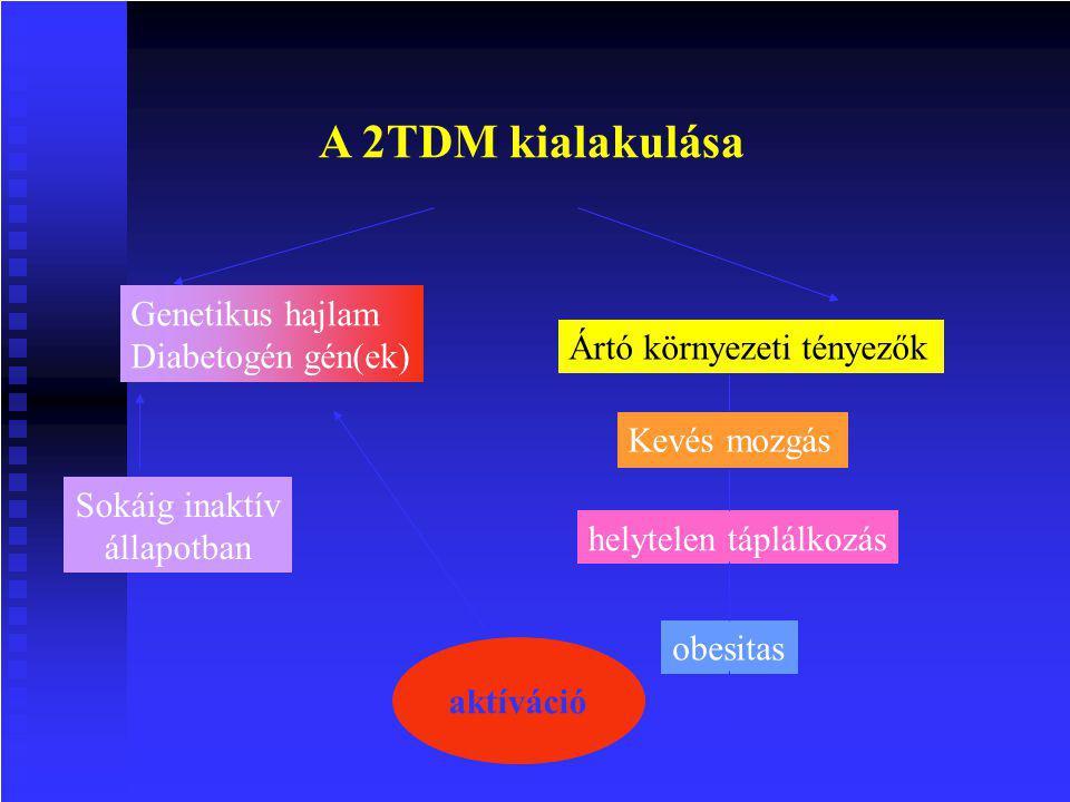 A 2TDM kialakulása Genetikus hajlam Diabetogén gén(ek)