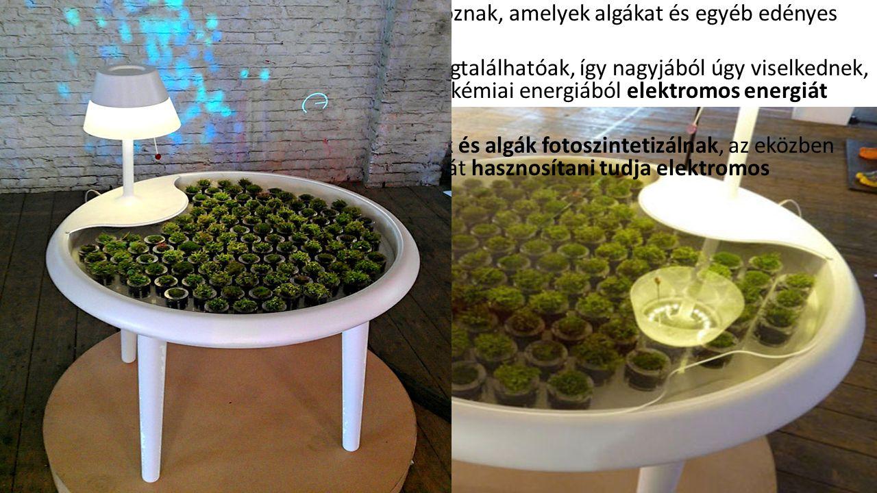 Az asztalfelületen kicsi mohacserepek sorakoznak, amelyek algákat és egyéb edényes növényeket is tartalmaznak.