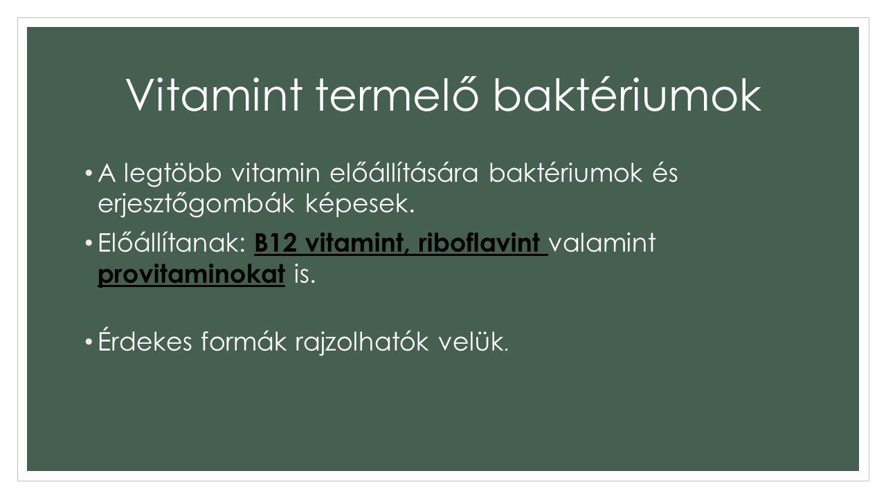 Vitamint termelő baktériumok
