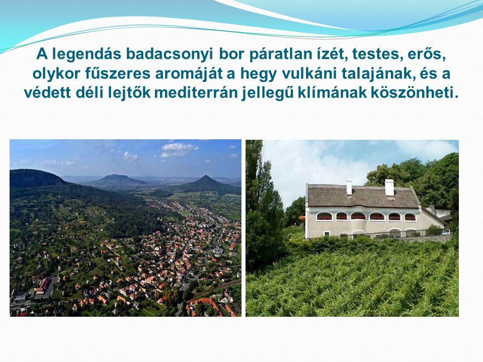 A legendás badacsonyi bor páratlan ízét, testes, erős, olykor fűszeres aromáját a hegy vulkáni talajának, és a védett déli lejtők mediterrán jellegű klímának köszönheti.